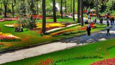 TOKİ Pendik'te Yeşil Alan Çalışması Yapacak