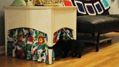 Kedi Sahibi Olanlar İçin Eğlenceli Dekorasyon Fikirleri