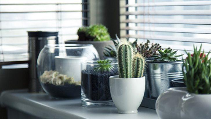 Ev Dekorasyonunda Kaktüs Kullanımı