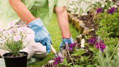 Sıfır Bakımla Bitki Yetiştirme Nasıl Yapılır?