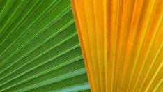 Bu Yılın Trendi Tropikal ve Yeşil Rengi